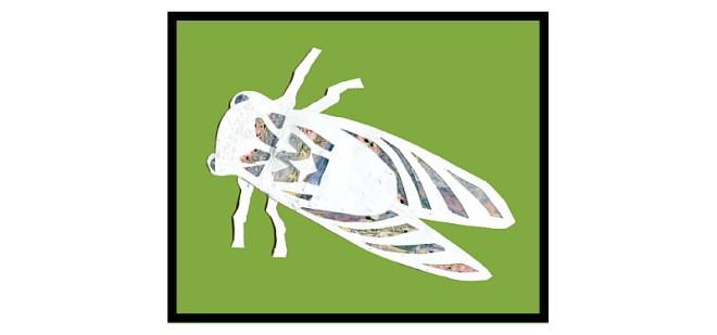 cicadashell_backcover