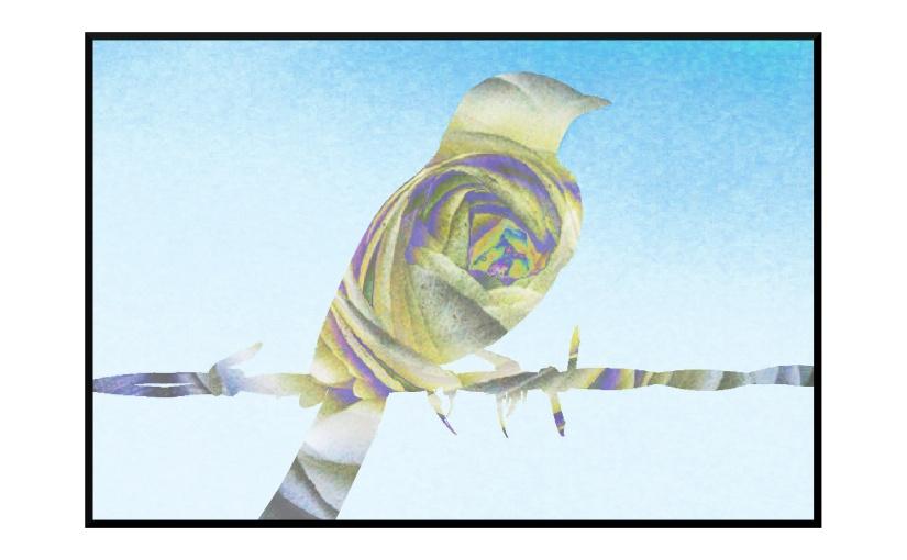 Illustration: lark on barbed wire